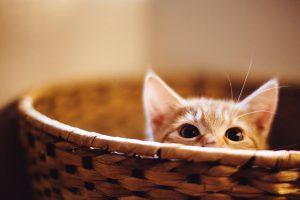 kitten A7