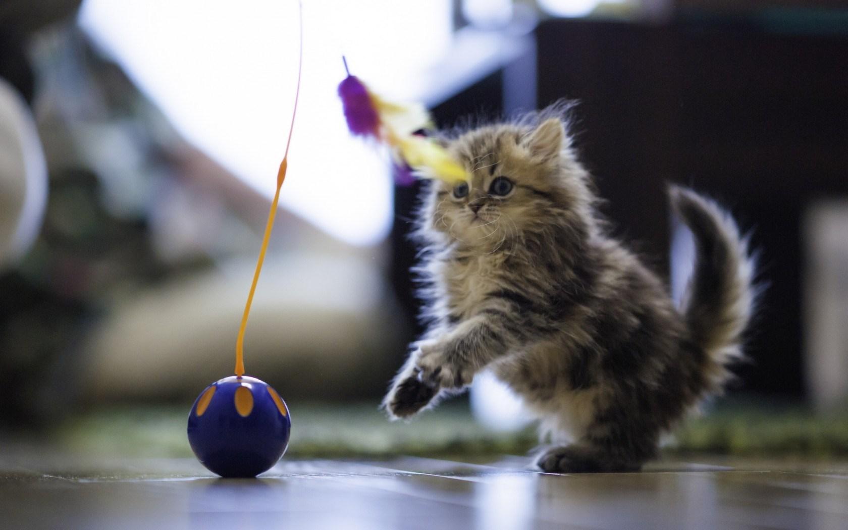 kitten A8