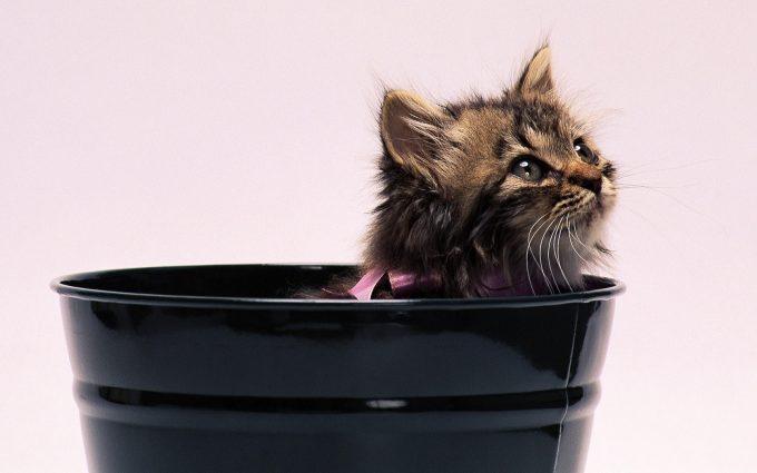 kitten A9