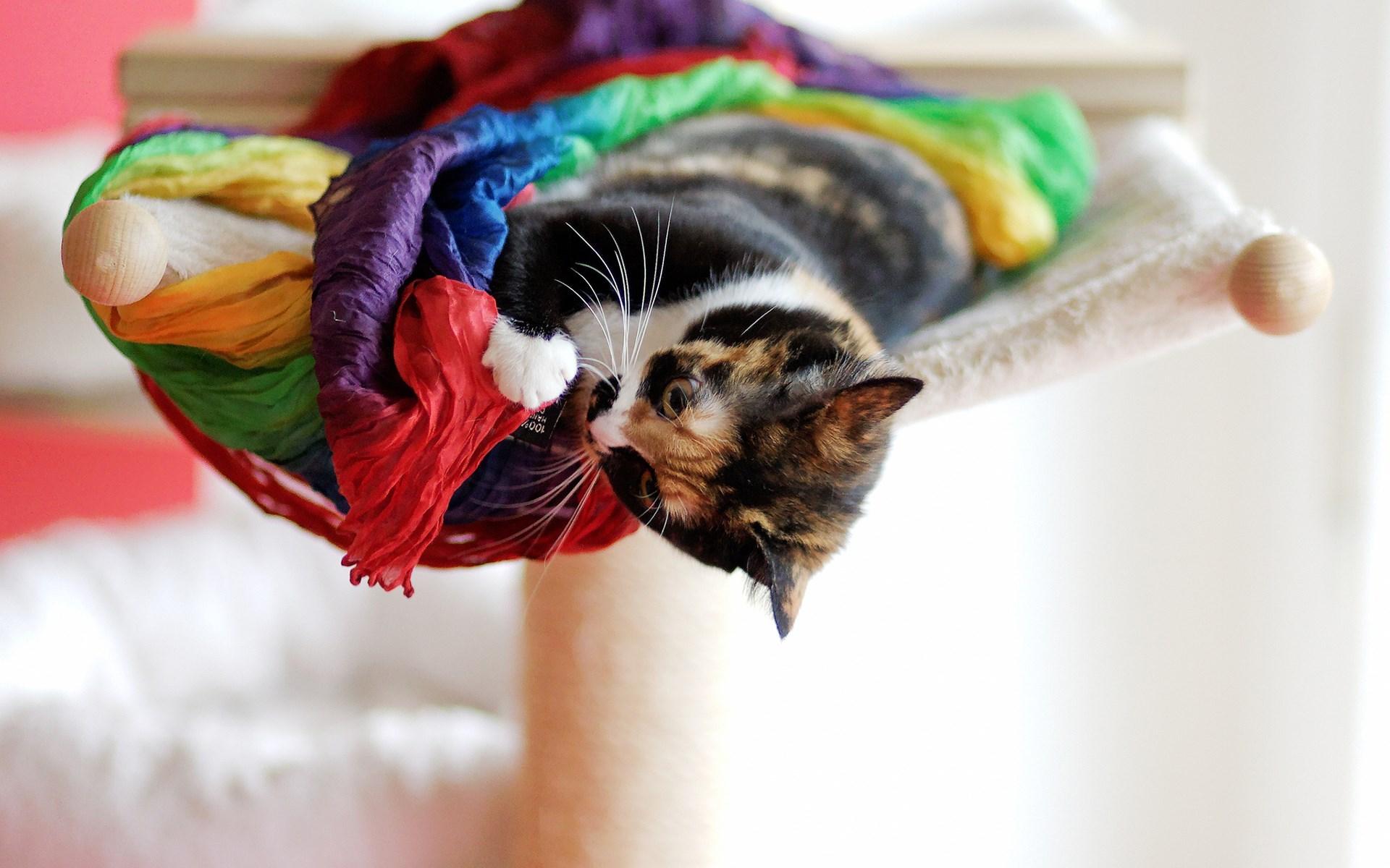 kitten desktop wallpaper