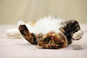 kitten desktop wallpapers
