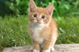 kitten innocent