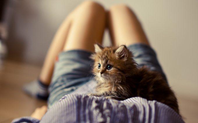 kitten pictures girl