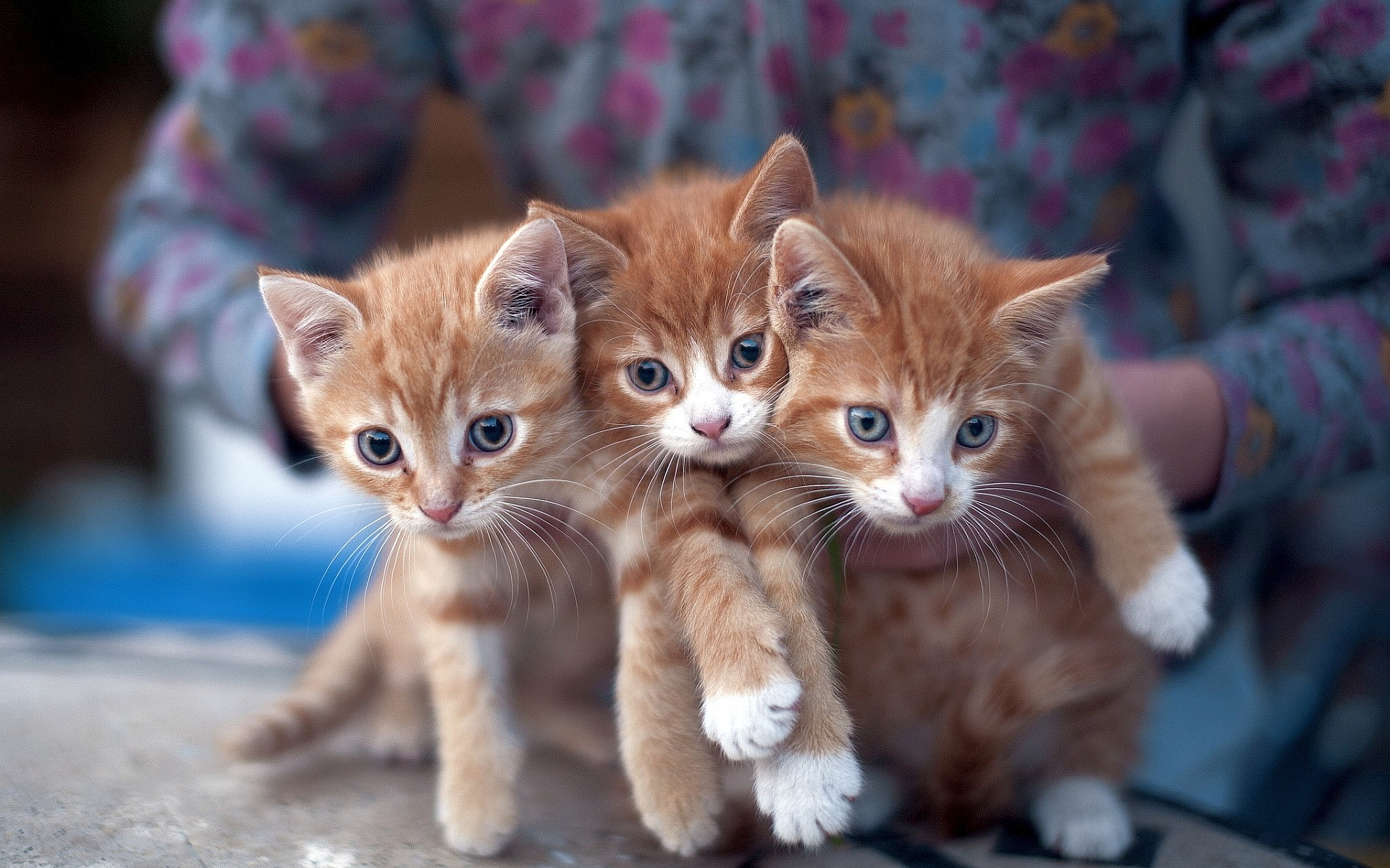 kitten pictures lovely