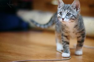 kitten pictures magnificent