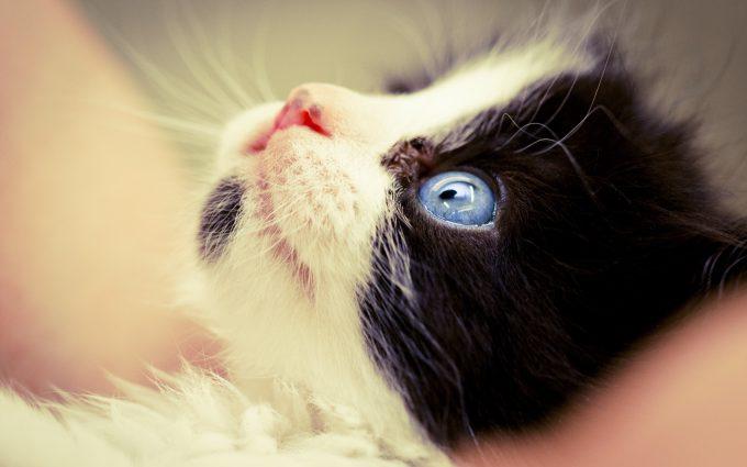 kitten wallpaper A2