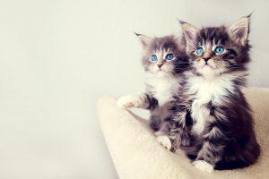 kitten wallpaper A3