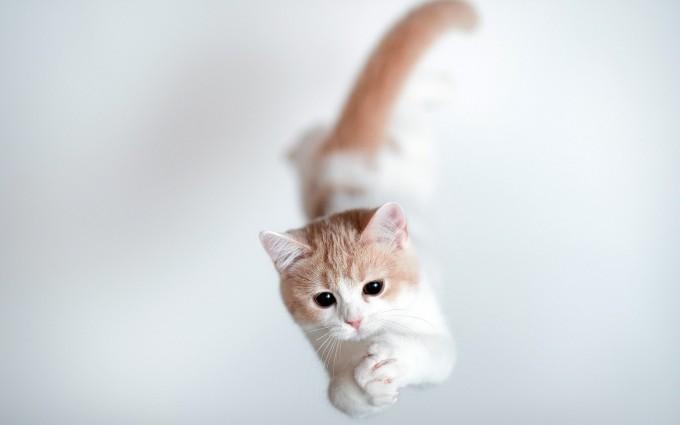 kitten walpaper