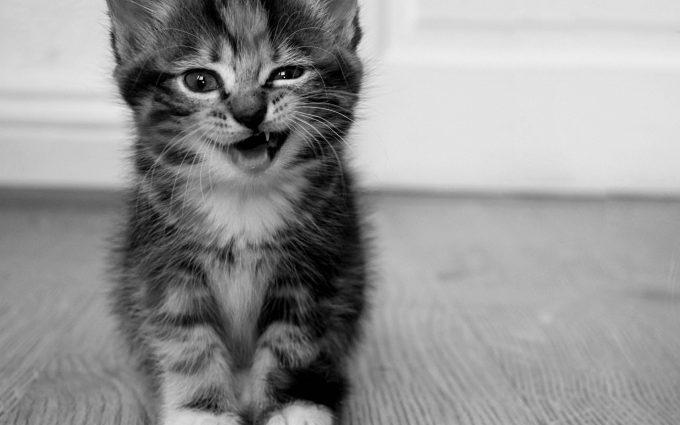 kitty cat wallpaper