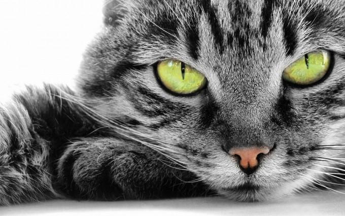 kitty desktop backgrounds