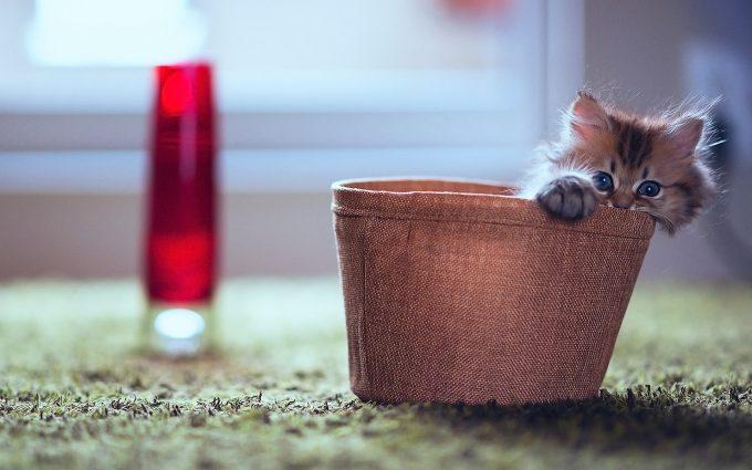 kitty desktop wallpaper