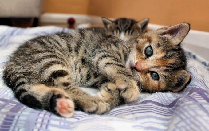 kitty kat wallpaper
