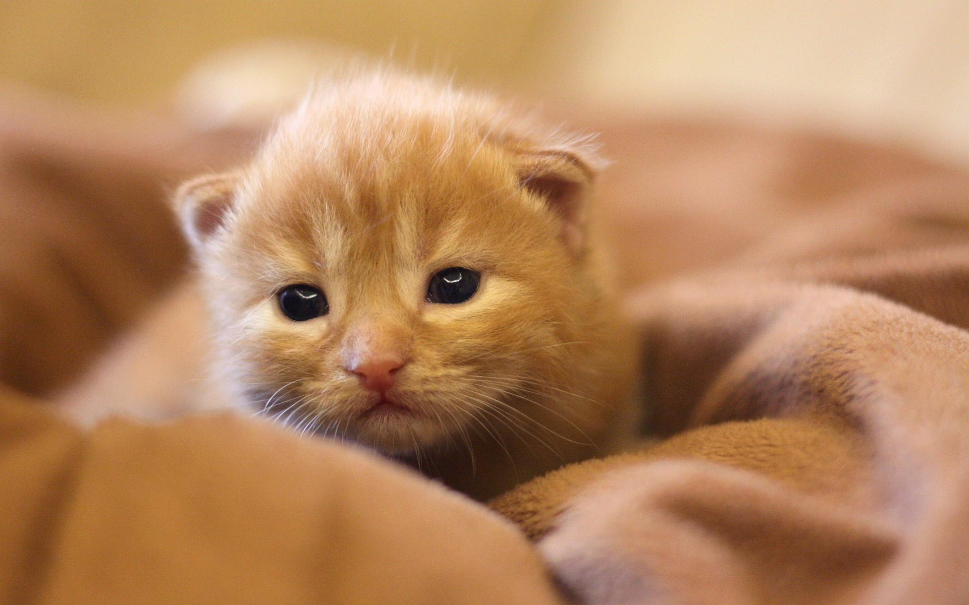 hd wallpaper kitty - photo #2