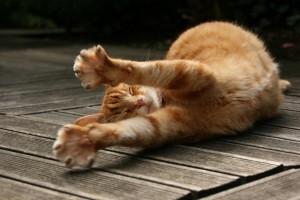 kitty walpaper