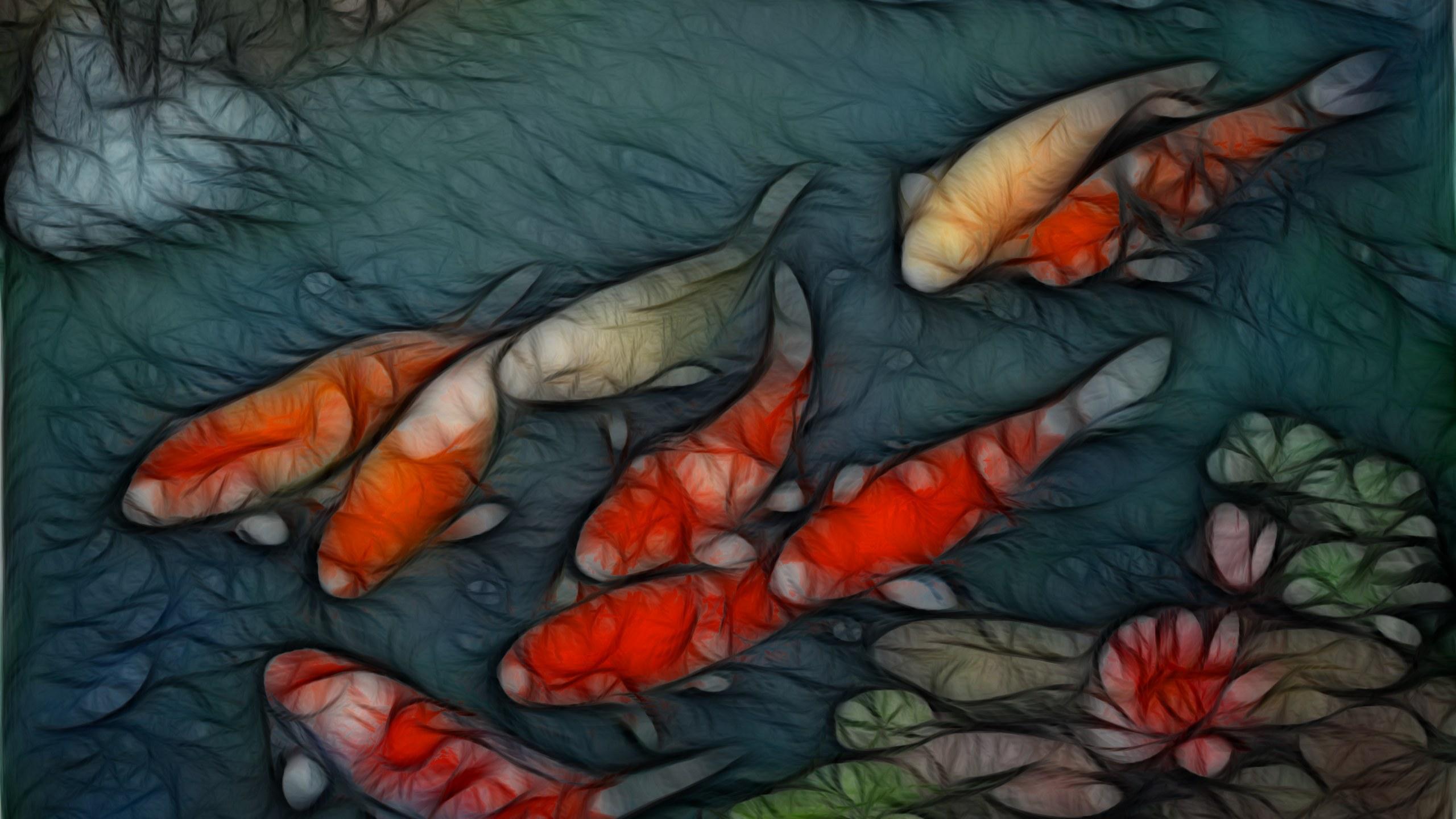koi fish hd