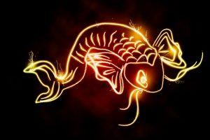 koi fish image