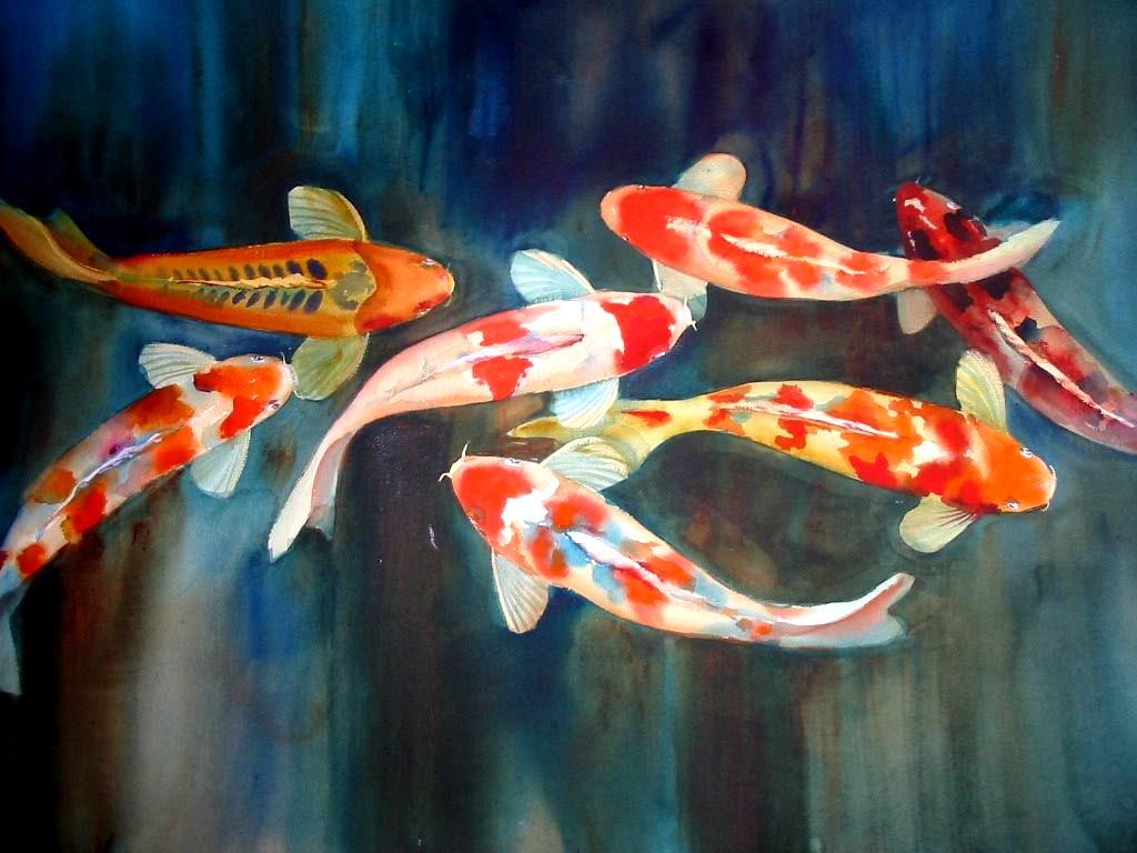 koi fishes