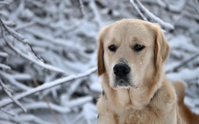 labrador winter