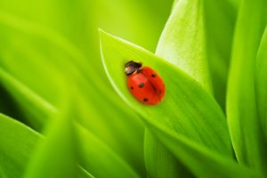 lady bug hd