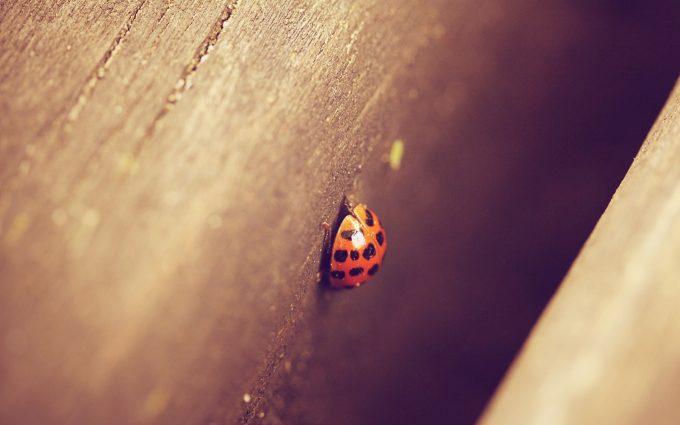 lady bug image