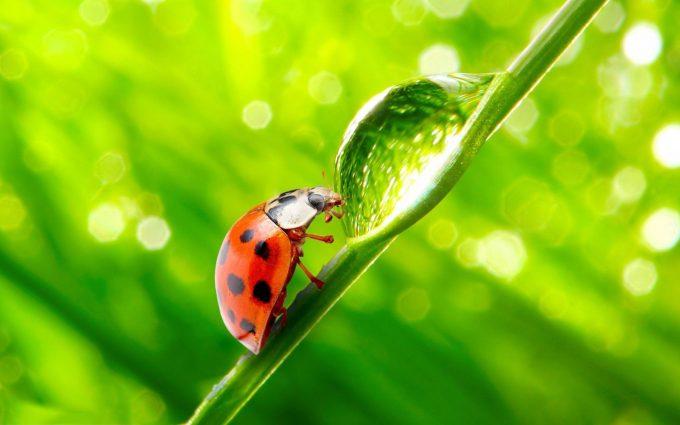 lady bug images