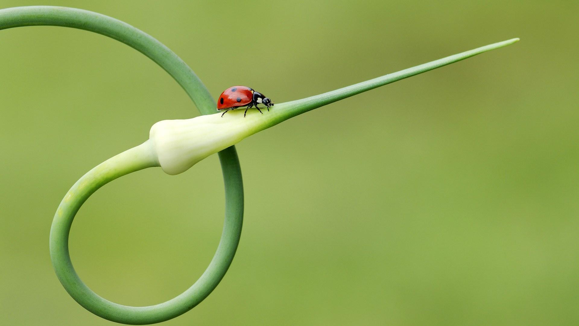 ladybird image hd