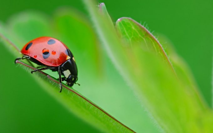 ladybug cute pictures