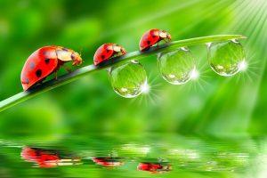 ladybugs wallpapers hd