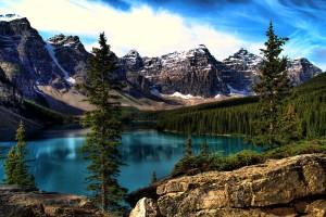 lake wallpaper trees