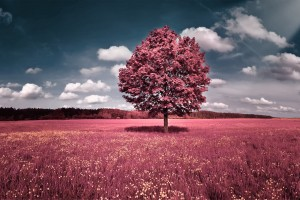 landscape photography art