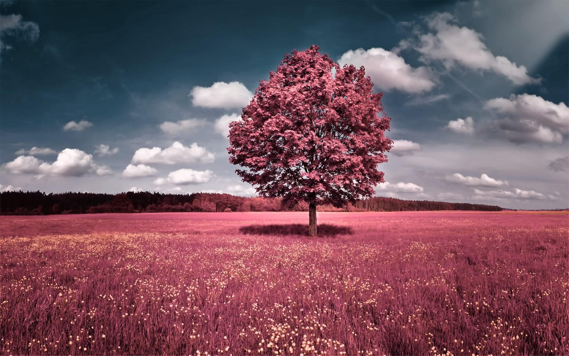 landscape photography art