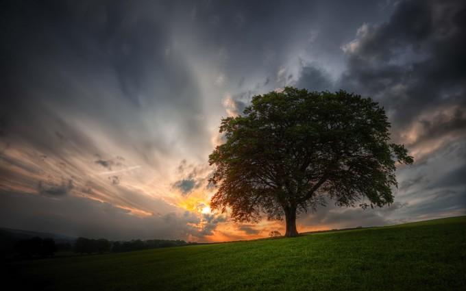 landscape tree dark
