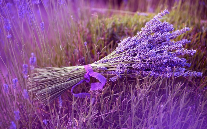 lavender backgrounds