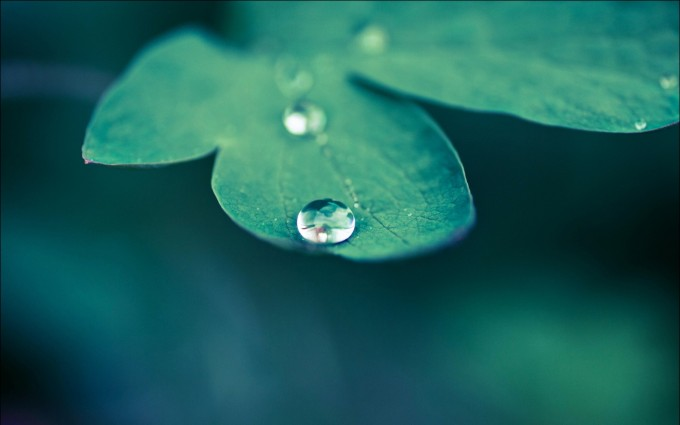 leaf backgrounds
