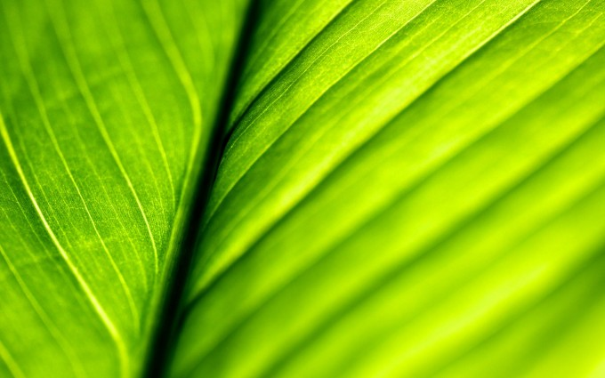 leaf green wallpaper