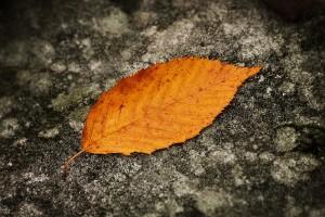 leaf on ground wallpaper