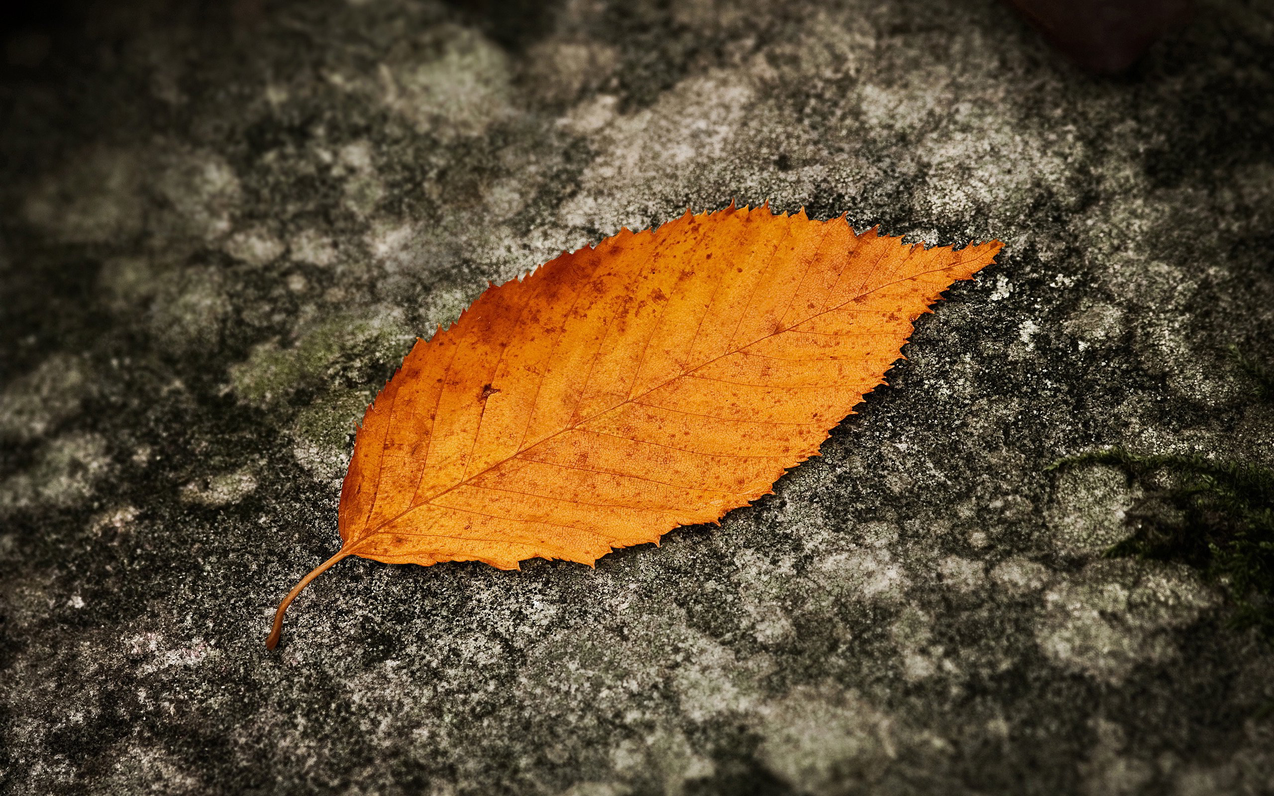 leaf on ground wallpaper