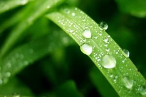 leaf pictures desktop