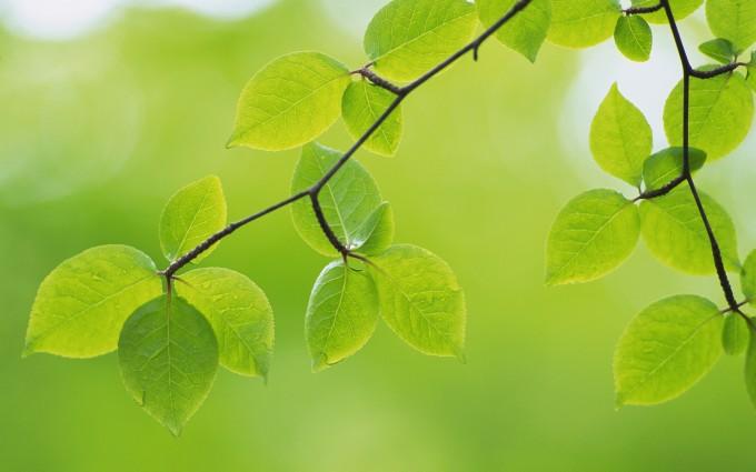 leaf pictures garden