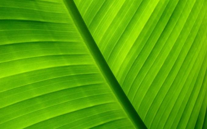leaf wallpaper 1080p