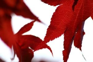 leaf wallpaper 1920x1080p