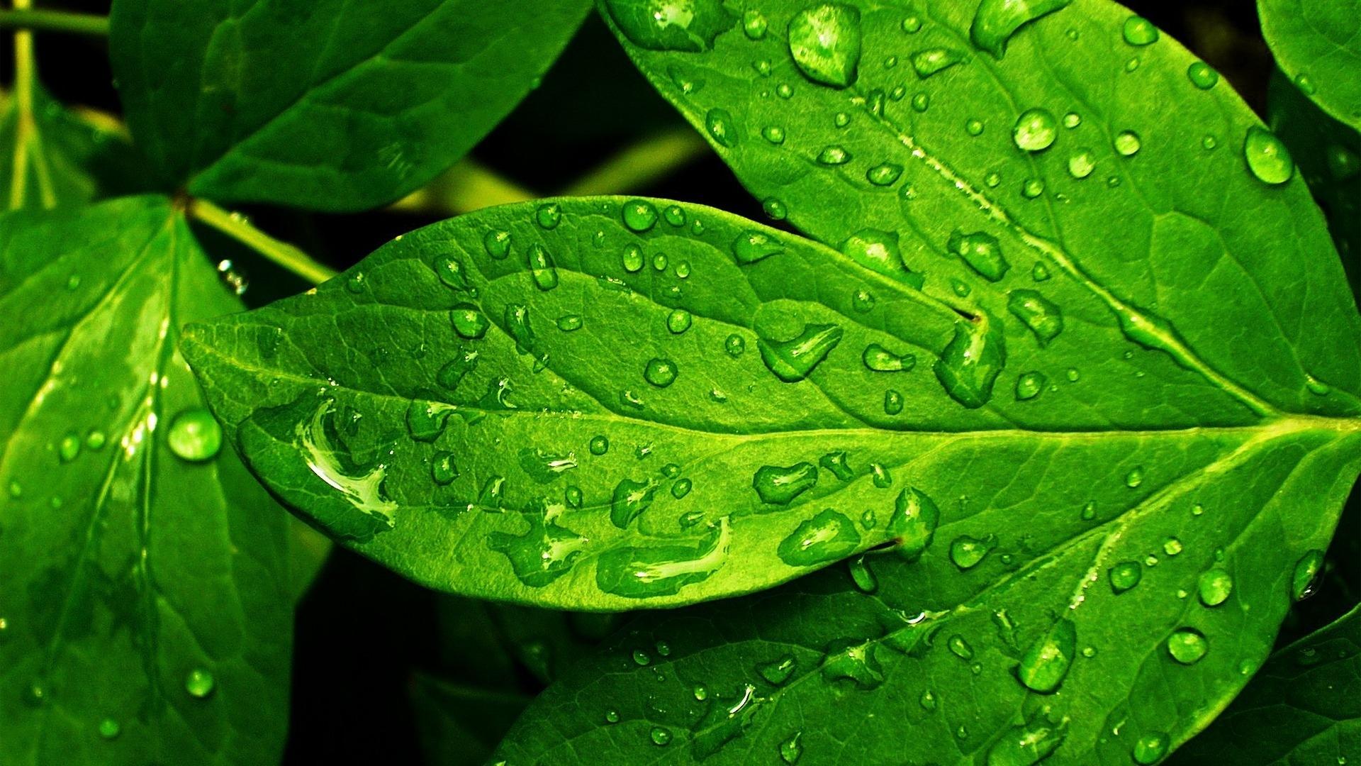 leaf wallpaper background
