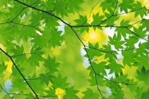leaf wallpaper beautiful