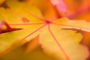 leaf wallpaper cool