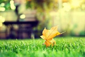 leaf wallpaper desktop backgrounds