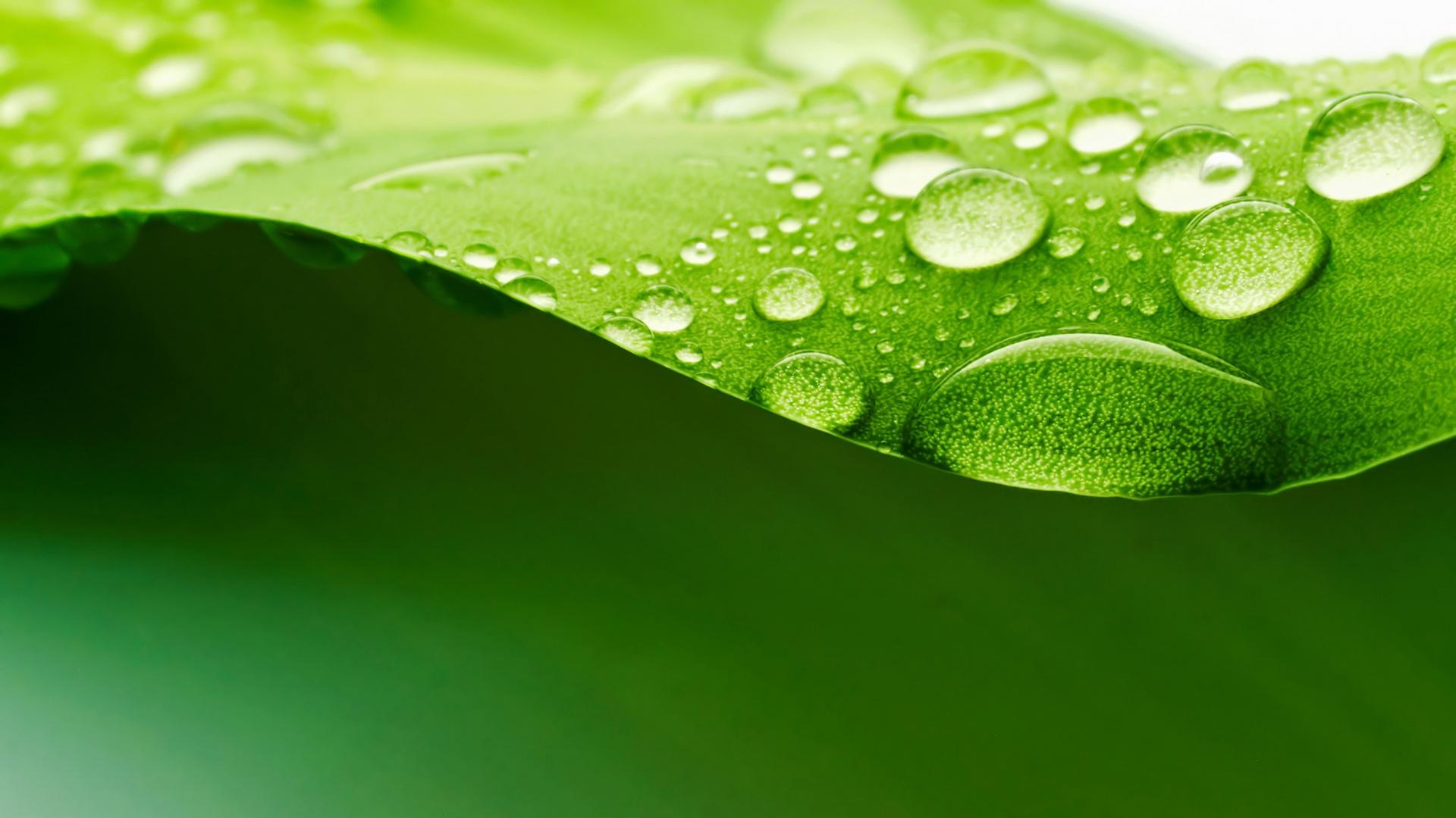 leaf wallpaper download