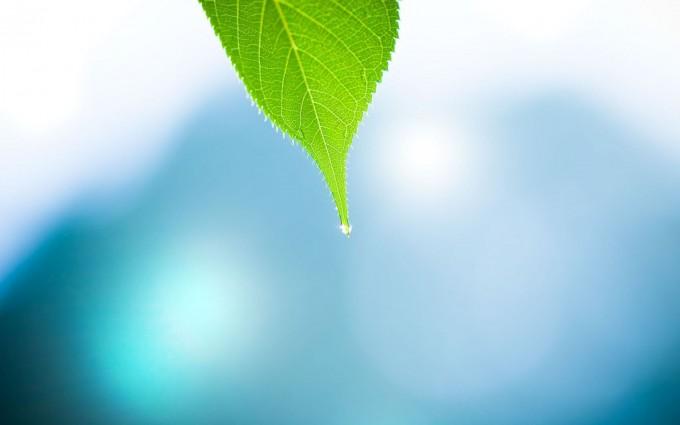 leaf wallpaper drops