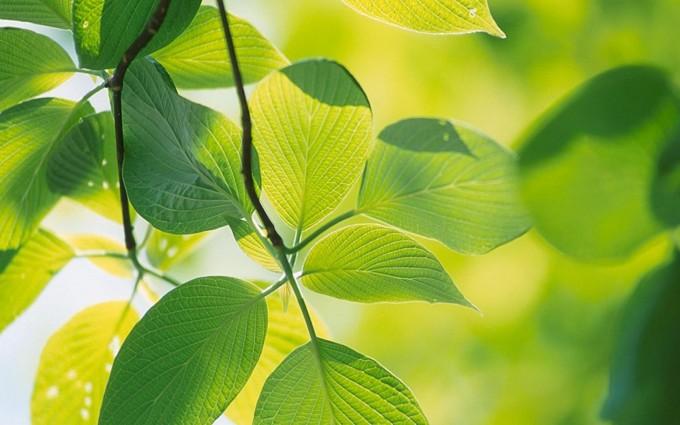 leaf wallpaper garden