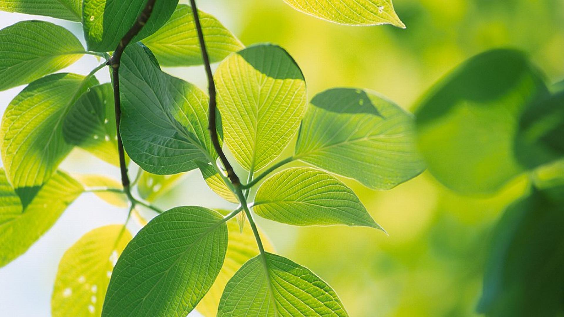 leaf wallpaper garden aa