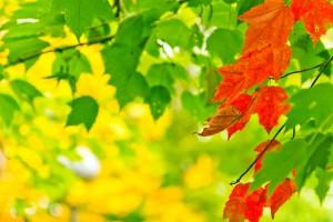 leaf wallpaper house